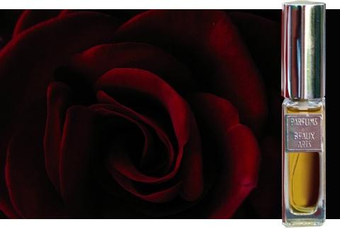 Dawn spencer hurwitz dirty rose