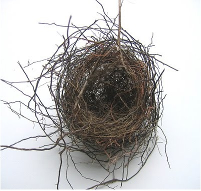 Abandoned birds nest