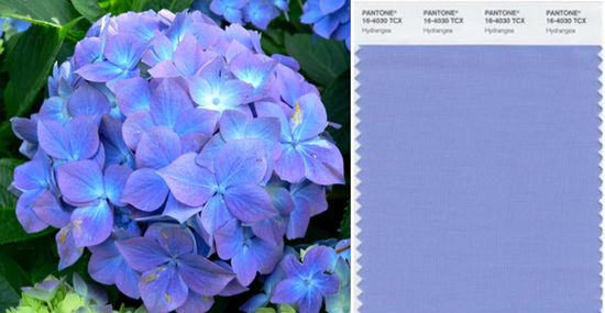 Pantone hydrangea blue lilac