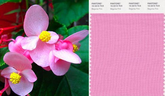 Pantone begonia pink