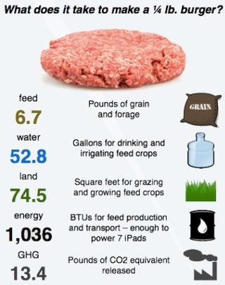 Carbon footprint hamburger burger meat