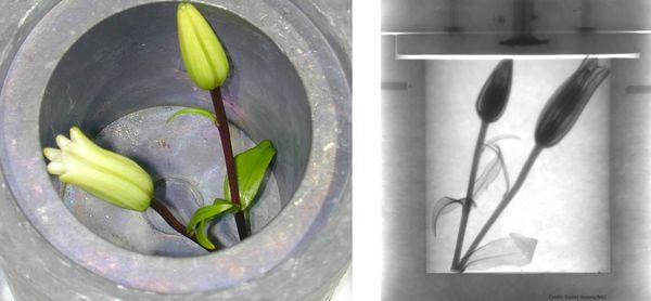 Darpa neutron x-ray imaging technology
