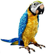 Squawkers McCaw FurReal Friends Parrot