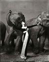 Irving_penn_dress_with_elephants