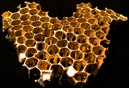 Derrick_cruz_gold_honeycomb
