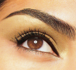 Classic_beautiful_eyebrows_brow