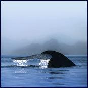 Nrdc_whale_tale