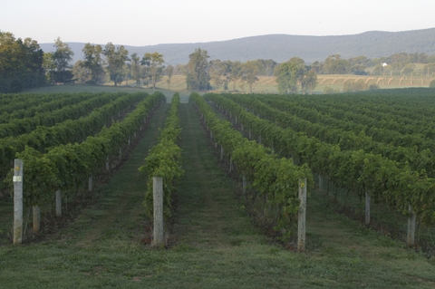 Virginia_wine_2